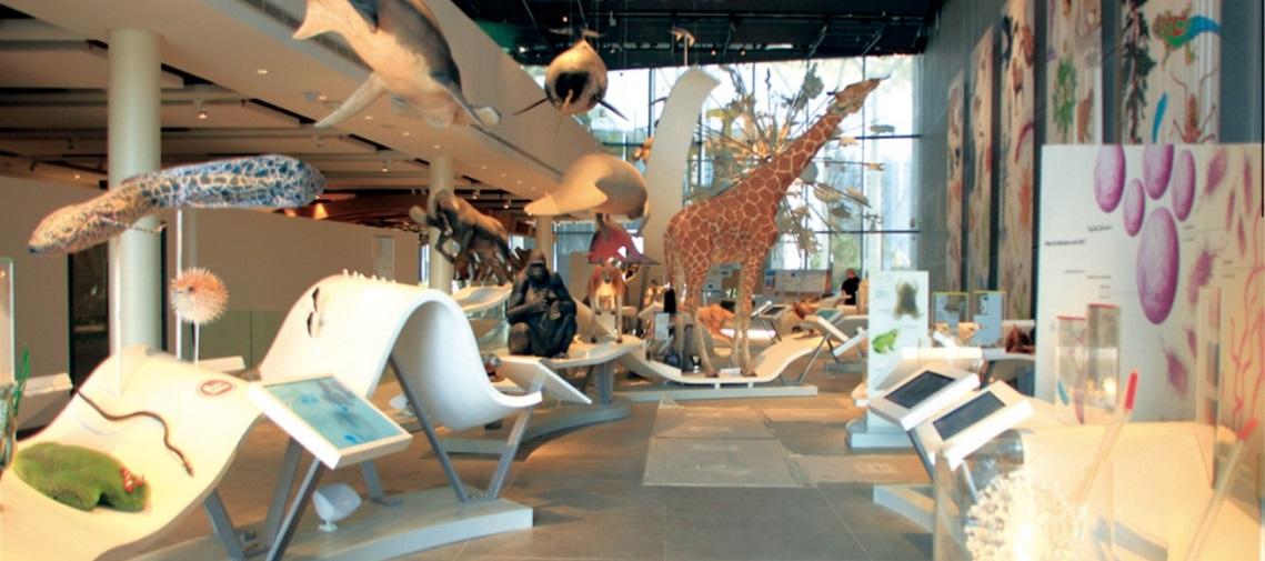 Museo_JACC_ProaSur